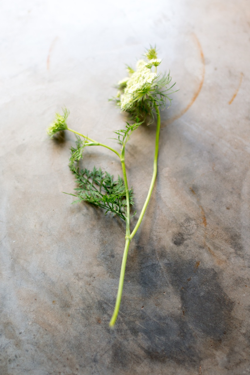 Carrot flowers year round (depends)