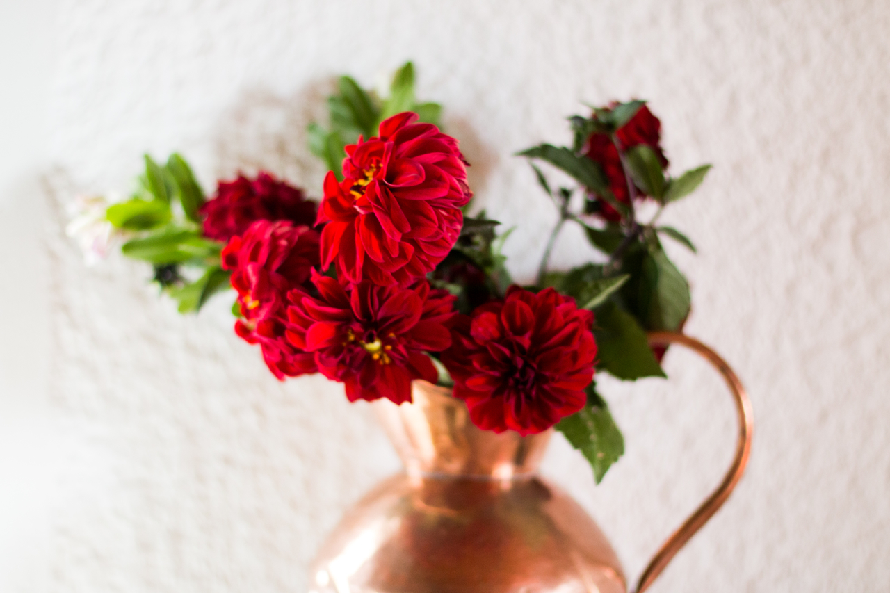 Red Dhalia  Jan /March