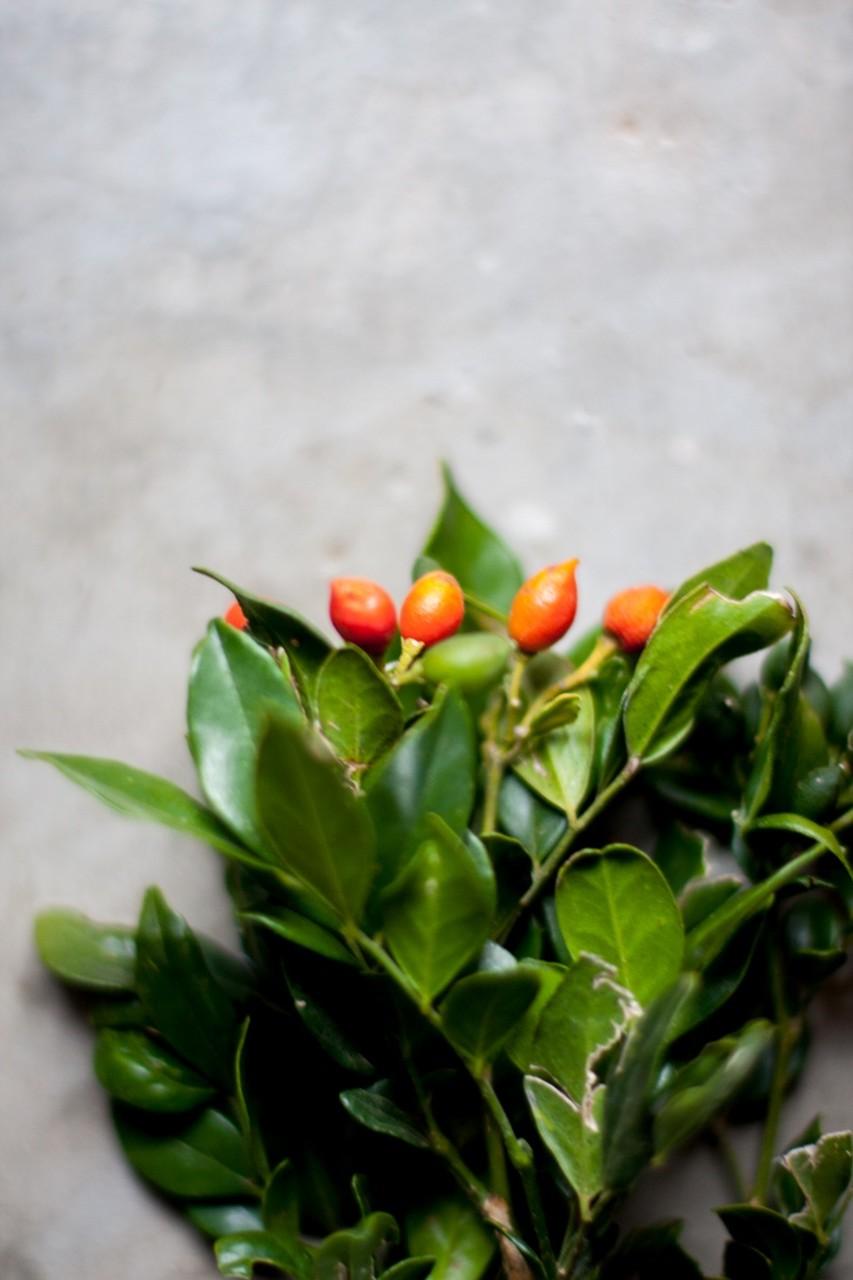 Red/ orange berries (various times of the year)
